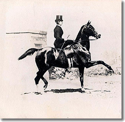 1900 Elvira Guerra su Libertin - Prima amazzone ai Giochi Olimpici di Parigi.